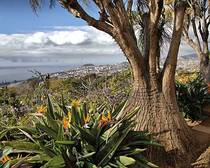 Madeira_Baum_Meer Rundreise Erlebnisreisen